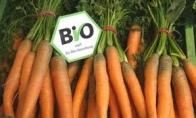 biologische groente - de groene peper